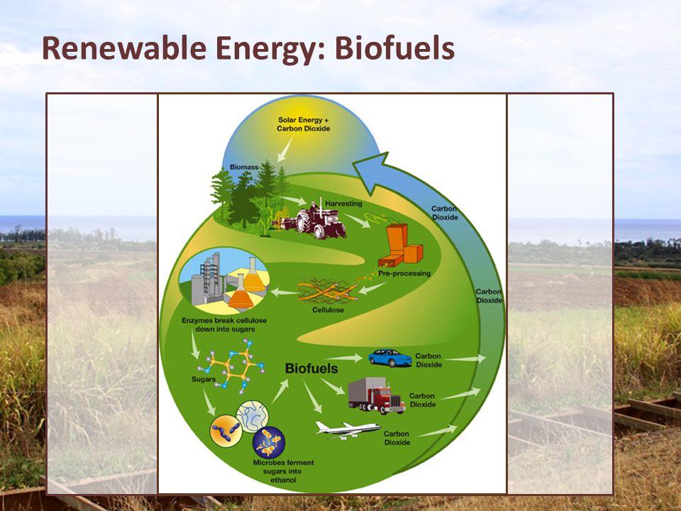 Renewable Energy: Biofuels