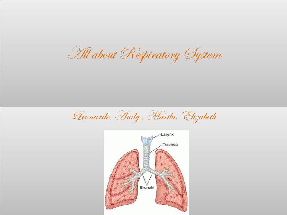 All about Respiratory System Leonardo, Andy, Marilu, Elizabeth