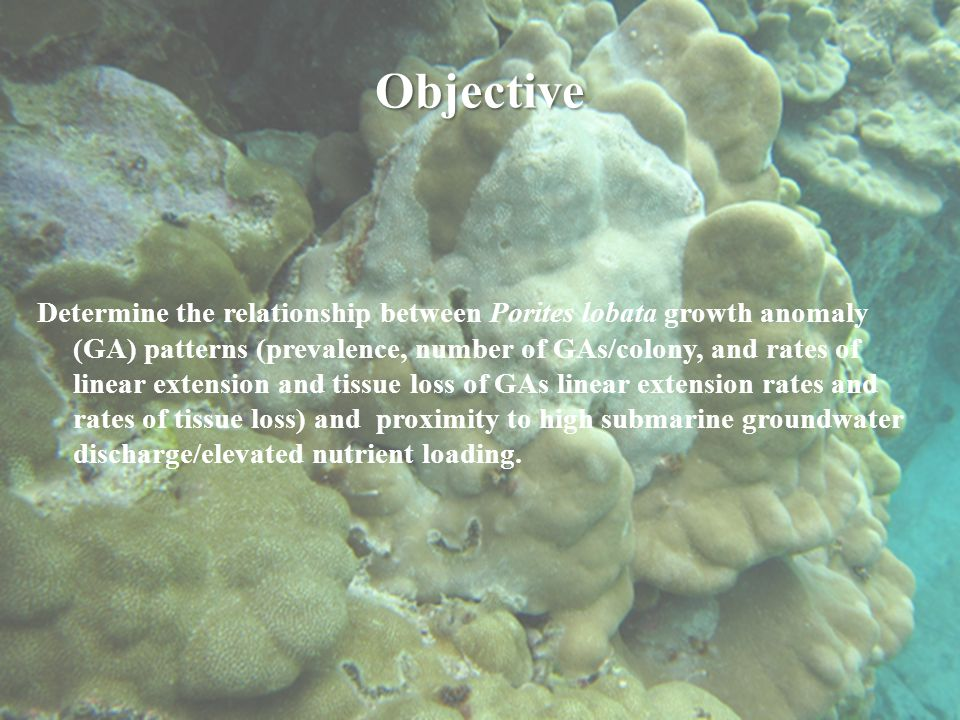 Objective Determine the relationship between Porites lobata growth anomaly (GA) patterns (prevalence, number of GAs/colony, and rates of linear extension and tissue loss of GAs linear extension rates and rates of tissue loss) and proximity to high submarine groundwater discharge/elevated nutrient loading.