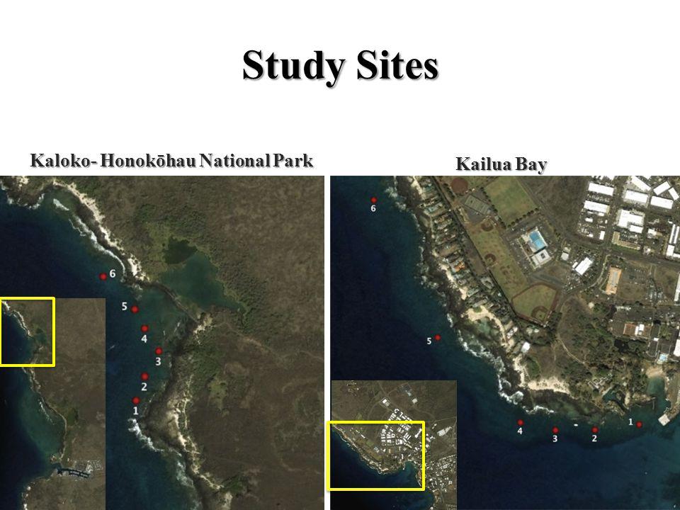 Study Sites Kaloko- Honokōhau National Park Kailua Bay