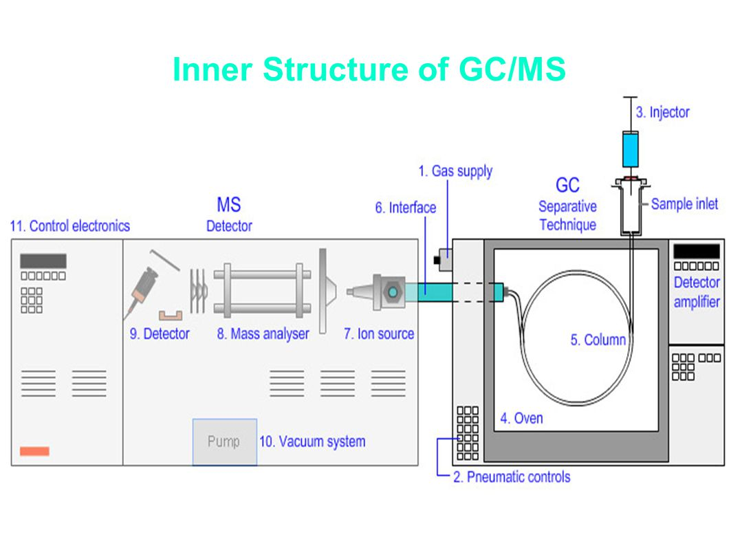 Inner Structure of GC/MS