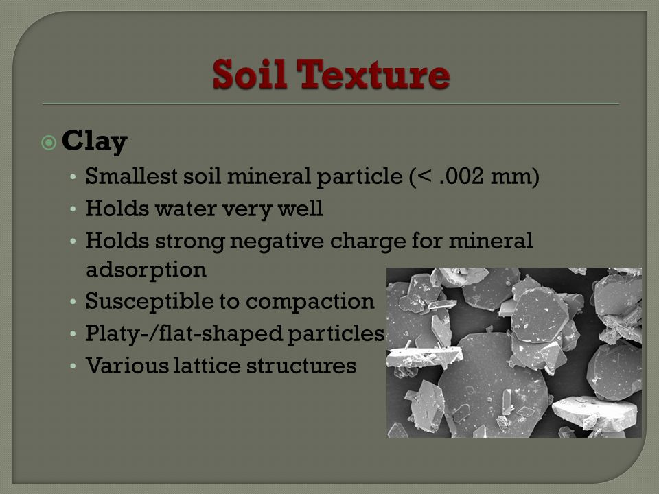 Clay Smallest soil mineral particle (<.002 mm) Holds water very well Holds strong negative charge for mineral adsorption Susceptible to compaction Pla