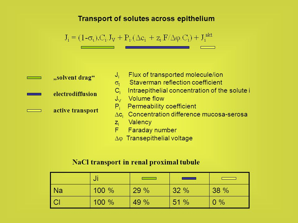 Transport of solutes across epithelium solvent drag electrodiffusion active transport Ji Na100 %29 %32 %38 % Cl100 %49 %51 %0 % NaCl transport in rena