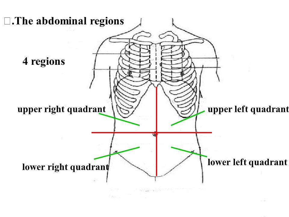 upper right quadrantupper left quadrant lower right quadrant lower left quadrant.The abdominal regions 4 regions