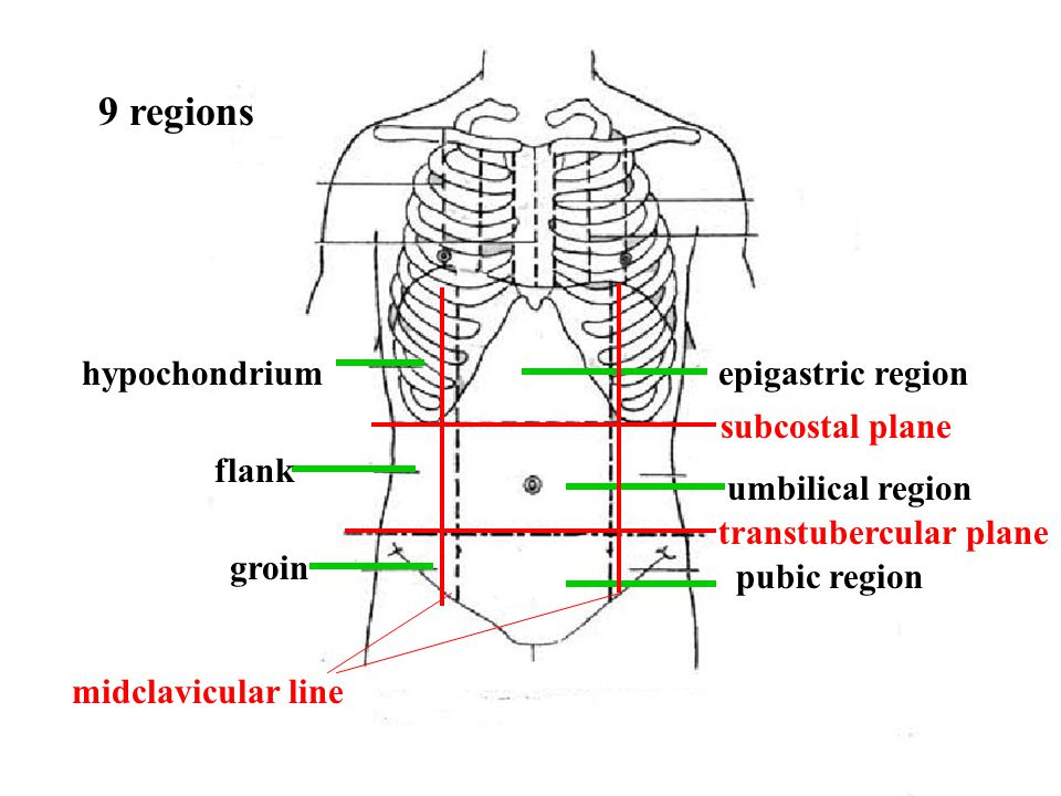 digestive canal digestive glands Chapter 5 The alimentary system (digestive system)