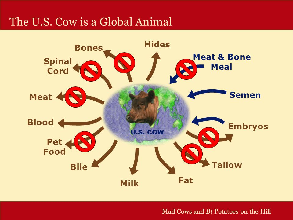 Mad Cows and Bt Potatoes on the Hill The U.S. Cow is a Global Animal U.S.
