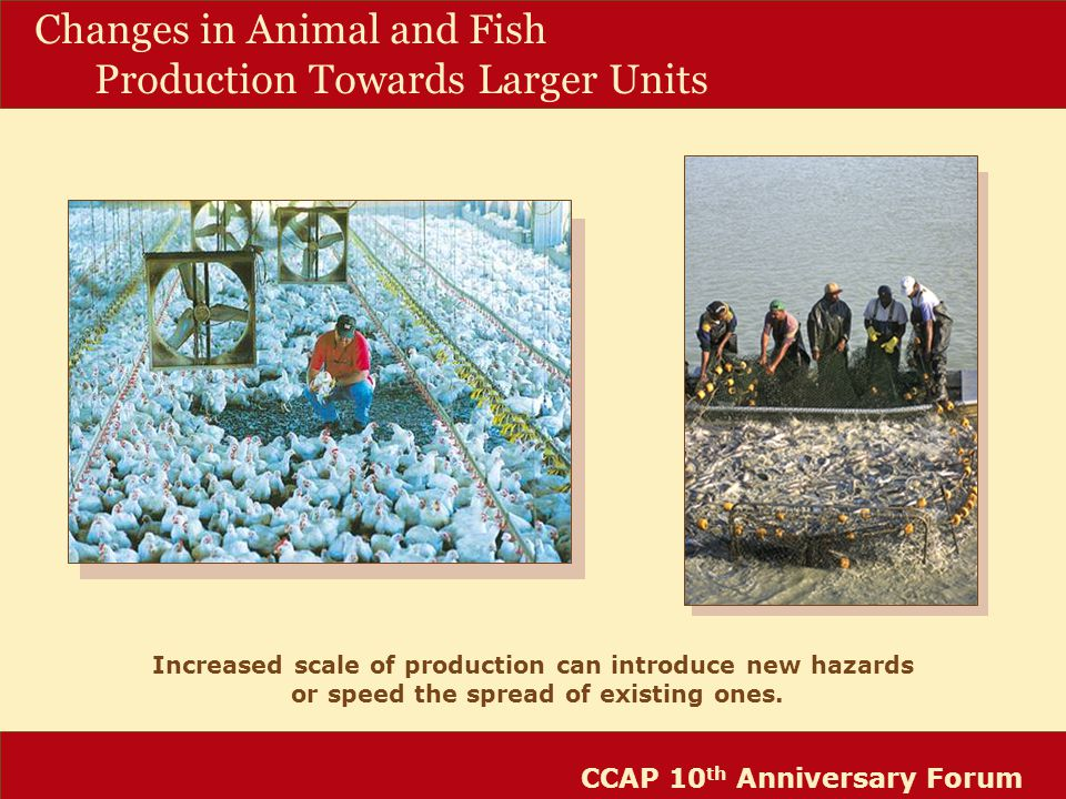 CCAP 10 th Anniversary Forum Changes in Animal and Fish Production Towards Larger Units Increased scale of production can introduce new hazards or speed the spread of existing ones.