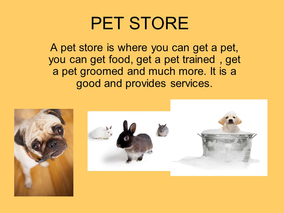 PET STORE A pet store is where you can get a pet, you can get food, get a pet trained, get a pet groomed and much more. It is a good and provides serv