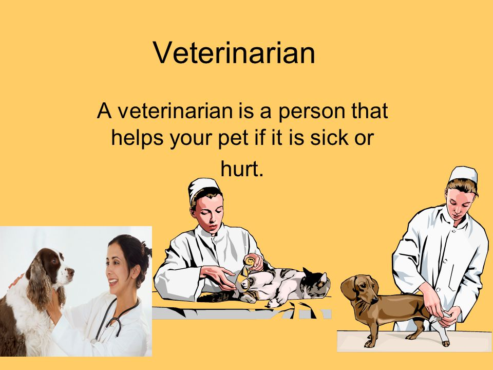 Veterinarian A veterinarian is a person that helps your pet if it is sick or hurt.