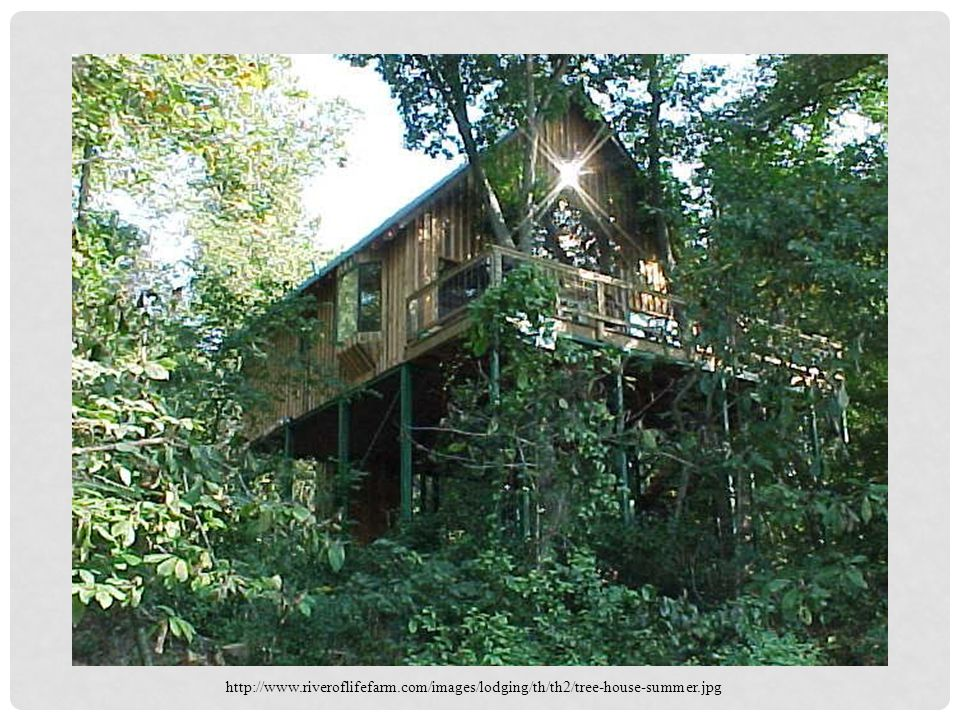 http://www.riveroflifefarm.com/images/lodging/th/th2/tree-house-summer.jpg