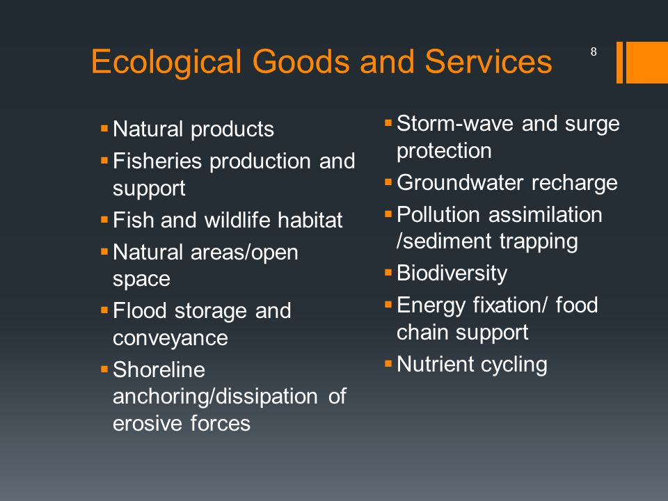 8 Ecological Goods and Services Natural products Fisheries production and support Fish and wildlife habitat Natural areas/open space Flood storage and conveyance Shoreline anchoring/dissipation of erosive forces Storm-wave and surge protection Groundwater recharge Pollution assimilation /sediment trapping Biodiversity Energy fixation/ food chain support Nutrient cycling