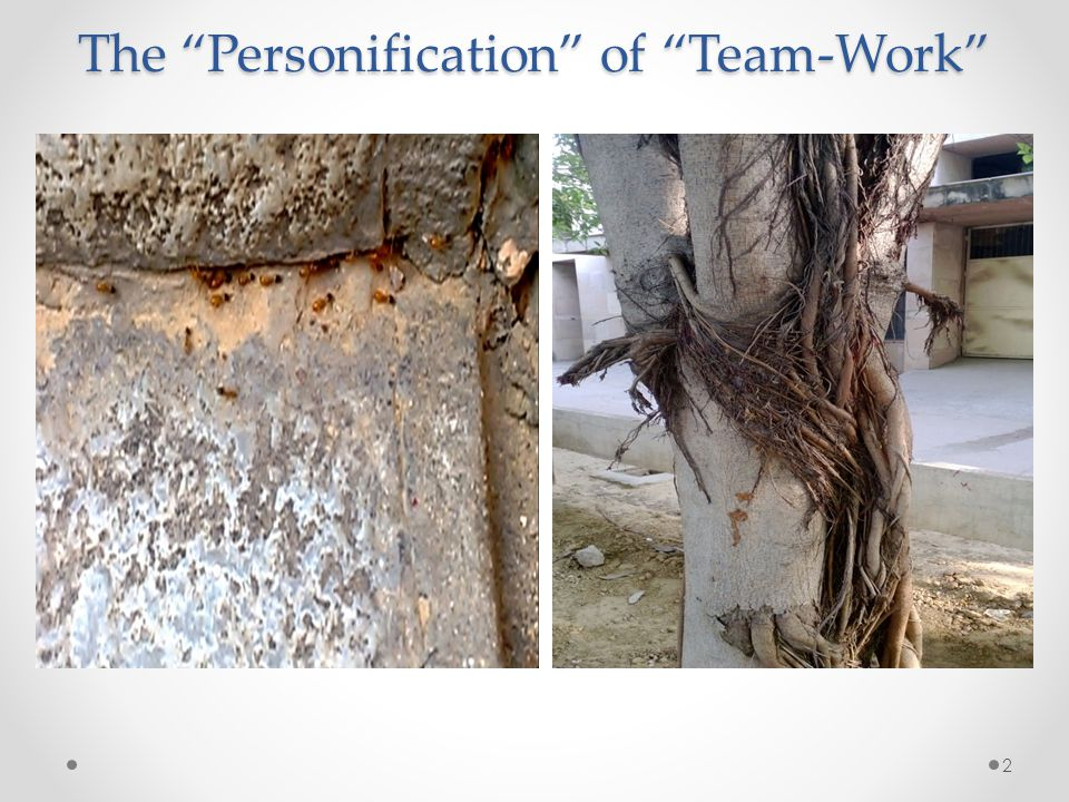 The Personification of Team-Work 2