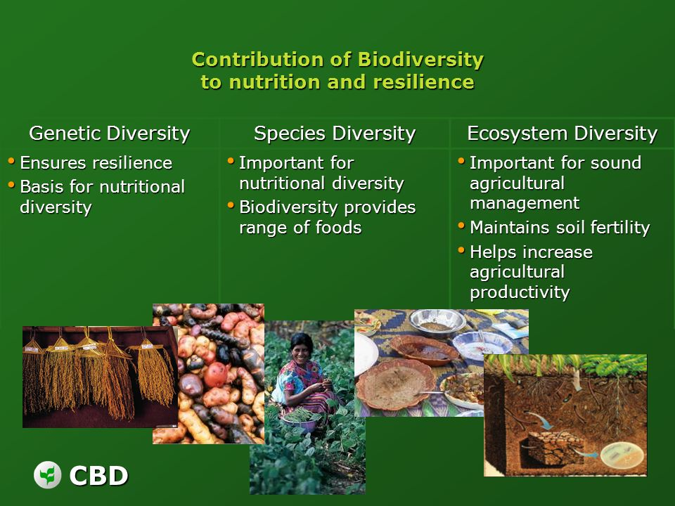 CBD Contribution of Biodiversity to nutrition and resilience Genetic Diversity Species Diversity Ecosystem Diversity Ensures resilience Ensures resili