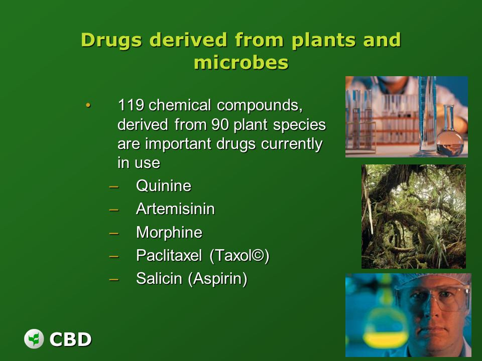 CBD Drugs derived from plants and microbes 119 chemical compounds, derived from 90 plant species are important drugs currently in use 119 chemical com