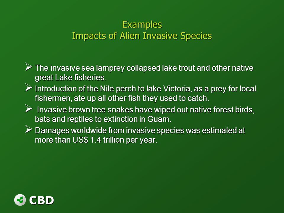 CBD Examples Impacts of Alien Invasive Species The invasive sea lamprey collapsed lake trout and other native great Lake fisheries. The invasive sea l