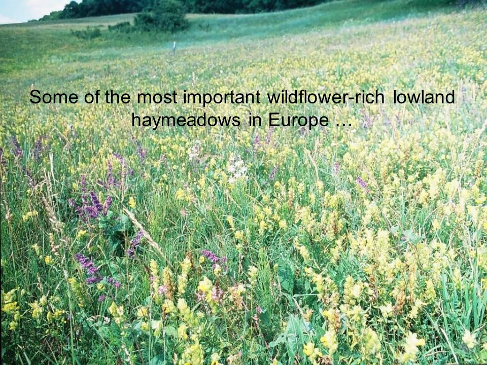 Some of the most important wildflower-rich lowland haymeadows in Europe …