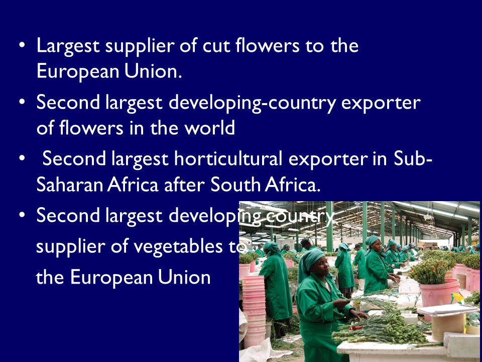 Largest supplier of cut flowers to the European Union.