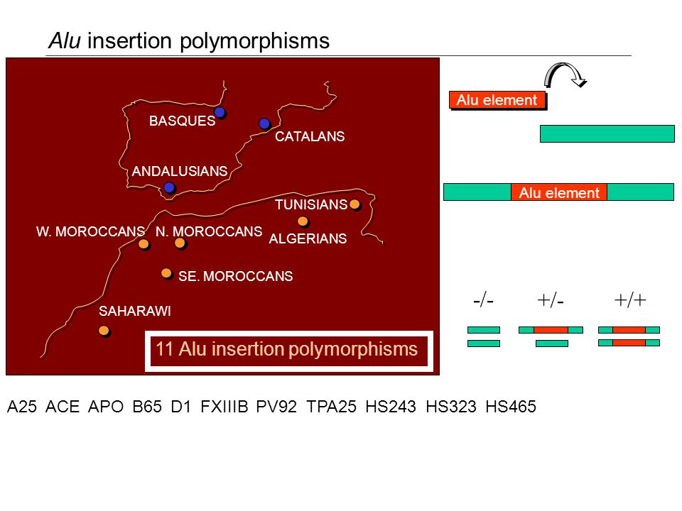 Alu insertion polymorphisms BASQUES CATALANS ANDALUSIANS ALGERIANS N.