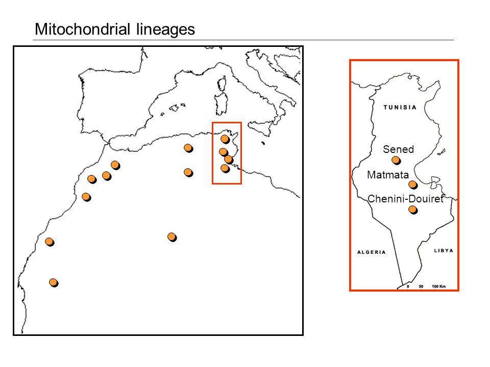 Mitochondrial lineages Sened Matmata Chenini-Douiret
