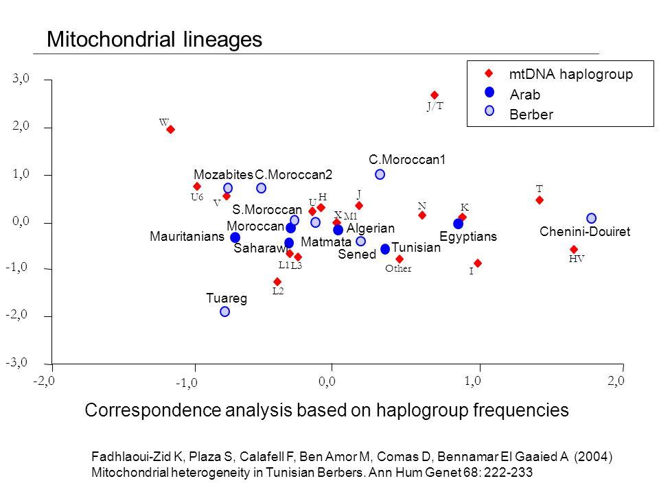 Mitochondrial lineages -3,0 -2,0 -1,0 0,0 1,0 2,0 3,0 -2,0 -1,0 0,0 1,02,0 W U6 V L2 L1 L3 U H M1 X J Other N K I T HV J/T Mozabites C.Moroccan2 Mauritanians Tuareg Saharawi Moroccan S.Moroccan Matmata Algerian Sened Tunisian C.Moroccan1 Egyptians Chenini-Douiret mtDNA haplogroup Arab Berber Fadhlaoui-Zid K, Plaza S, Calafell F, Ben Amor M, Comas D, Bennamar El Gaaied A (2004) Mitochondrial heterogeneity in Tunisian Berbers.