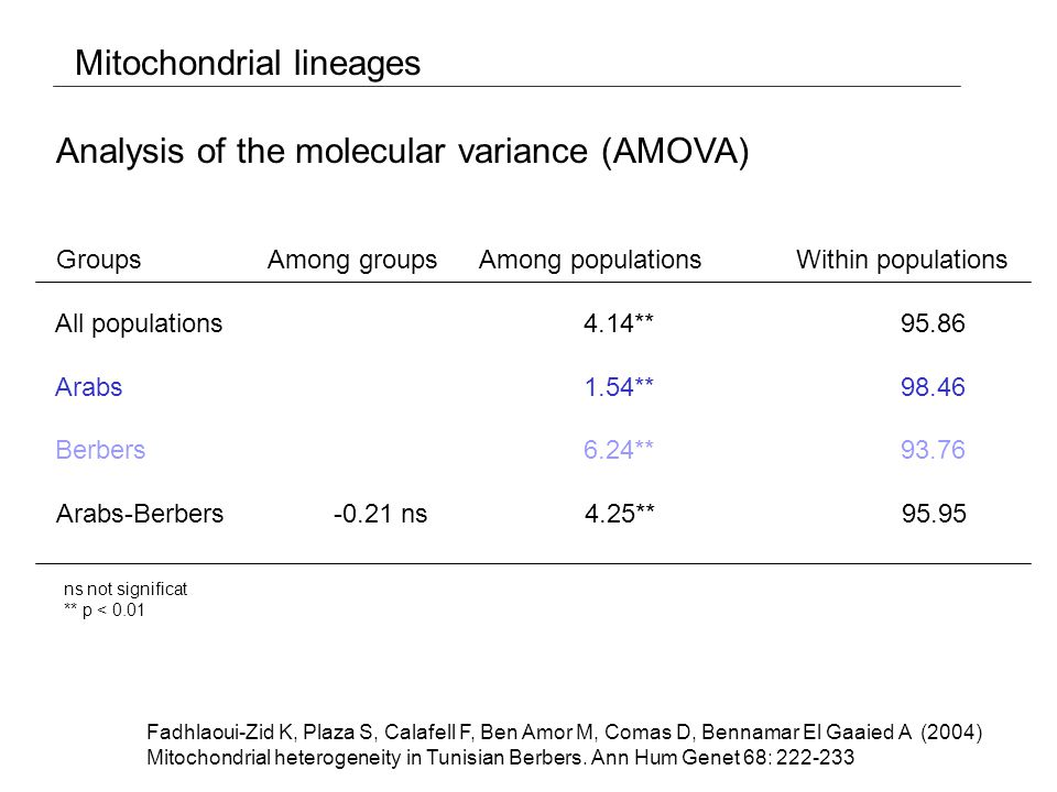 Mitochondrial lineages Arabs1.54**98.46 Berbers6.24**93.76 Analysis of the molecular variance (AMOVA) ns not significat ** p < 0.01 Fadhlaoui-Zid K, Plaza S, Calafell F, Ben Amor M, Comas D, Bennamar El Gaaied A (2004) Mitochondrial heterogeneity in Tunisian Berbers.