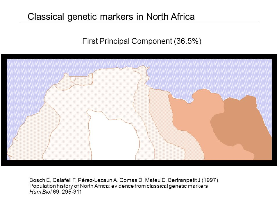 First PC (44.9%) Second PC (24.2%) Principal component analysis of the Alu insertion frequencies Alu insertion polymorphisms Sub-Saharans NW Africans Europeans