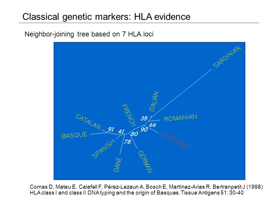 F* Y-chromosome lineages