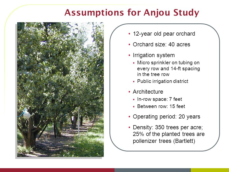 Assumptions for Anjou Study 12-year old pear orchard Orchard size: 40 acres Irrigation system Micro sprinkler on tubing on every row and 14-ft spacing
