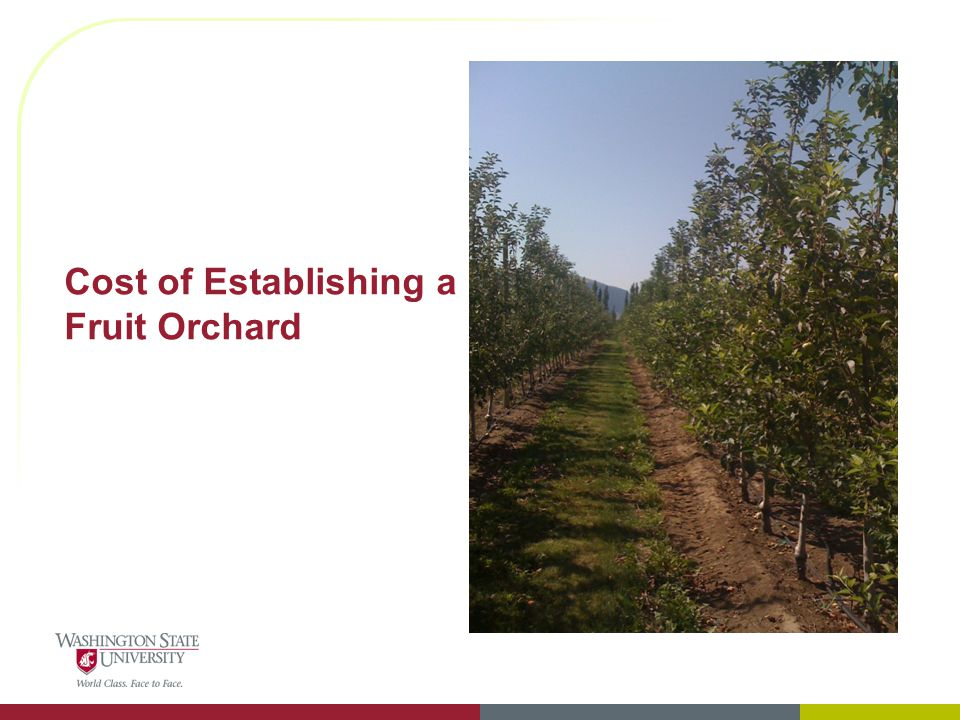 Cost of Establishing a Fruit Orchard