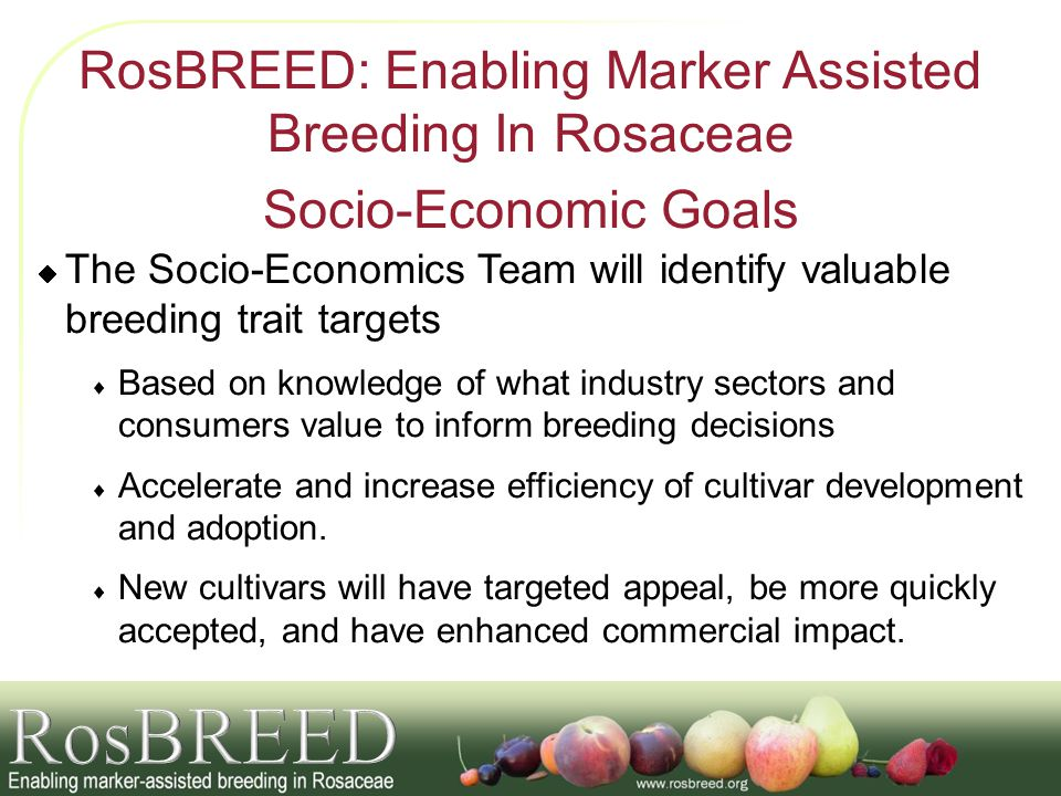 RosBREED: Enabling Marker Assisted Breeding In Rosaceae Socio-Economic Goals The Socio-Economics Team will identify valuable breeding trait targets Ba