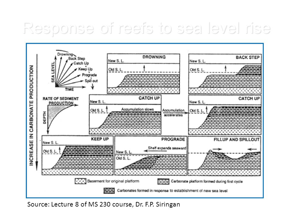 Response of reefs to sea level rise Source: Lecture 8 of MS 230 course, Dr. F.P. Siringan