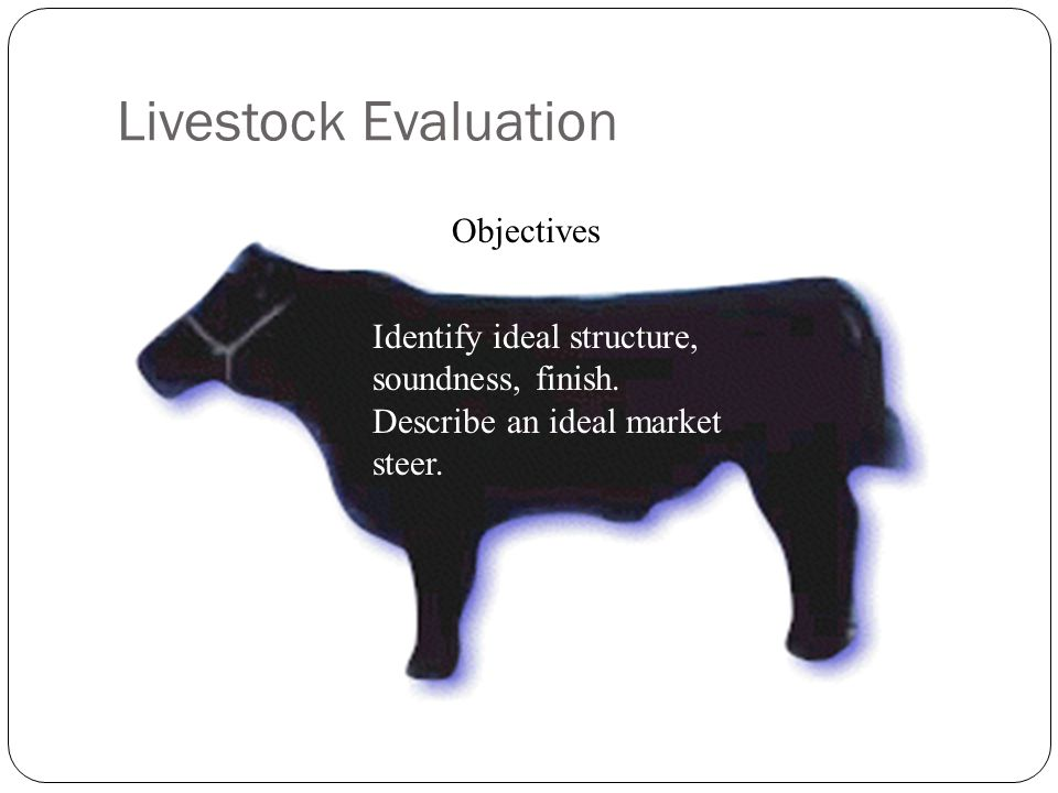 Objectives Identify ideal structure, soundness, finish. Describe an ideal market steer.