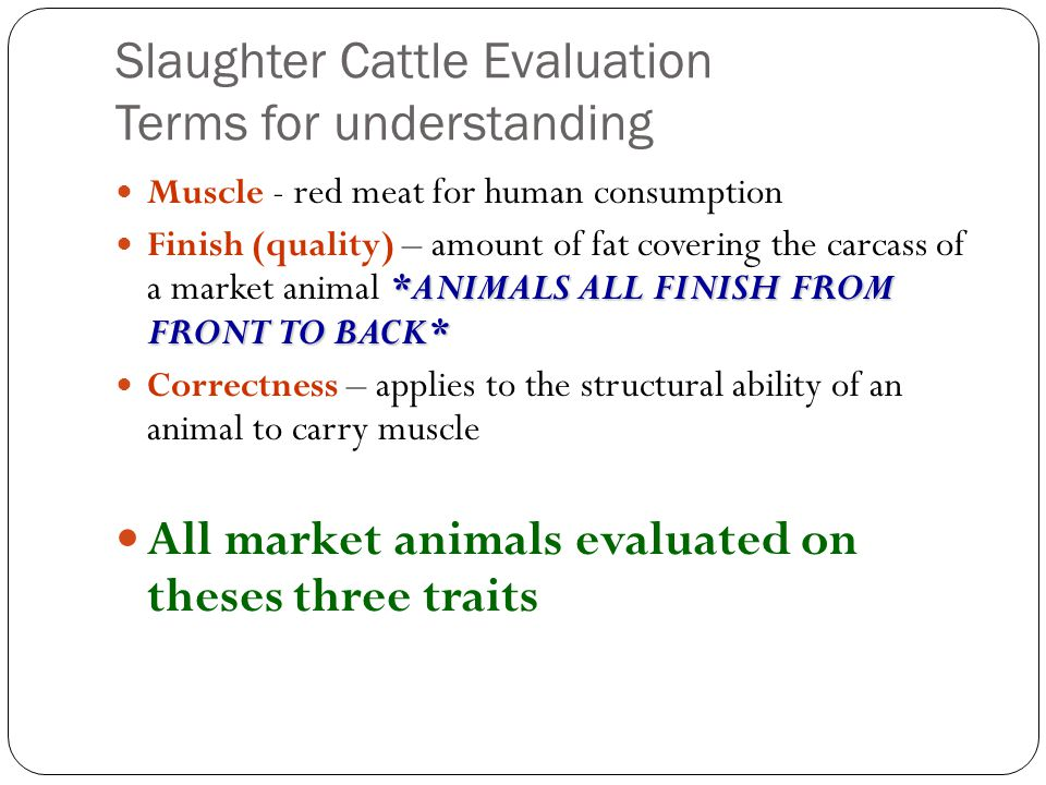 Slaughter Cattle Evaluation Terms for understanding Muscle - red meat for human consumption *ANIMALS ALL FINISH FROM FRONT TO BACK* Finish (quality) – amount of fat covering the carcass of a market animal *ANIMALS ALL FINISH FROM FRONT TO BACK* Correctness – applies to the structural ability of an animal to carry muscle All market animals evaluated on theses three traits
