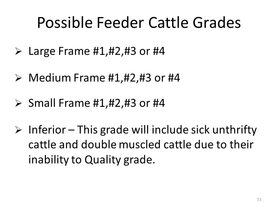 33 Possible Feeder Cattle Grades Large Frame #1,#2,#3 or #4 Medium Frame #1,#2,#3 or #4 Small Frame #1,#2,#3 or #4 Inferior – This grade will include