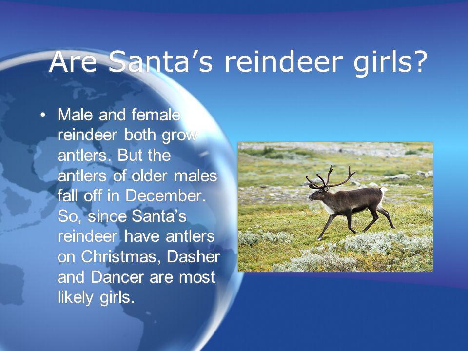 Are Santas reindeer girls? Male and female reindeer both grow antlers. But the antlers of older males fall off in December. So, since Santas reindeer