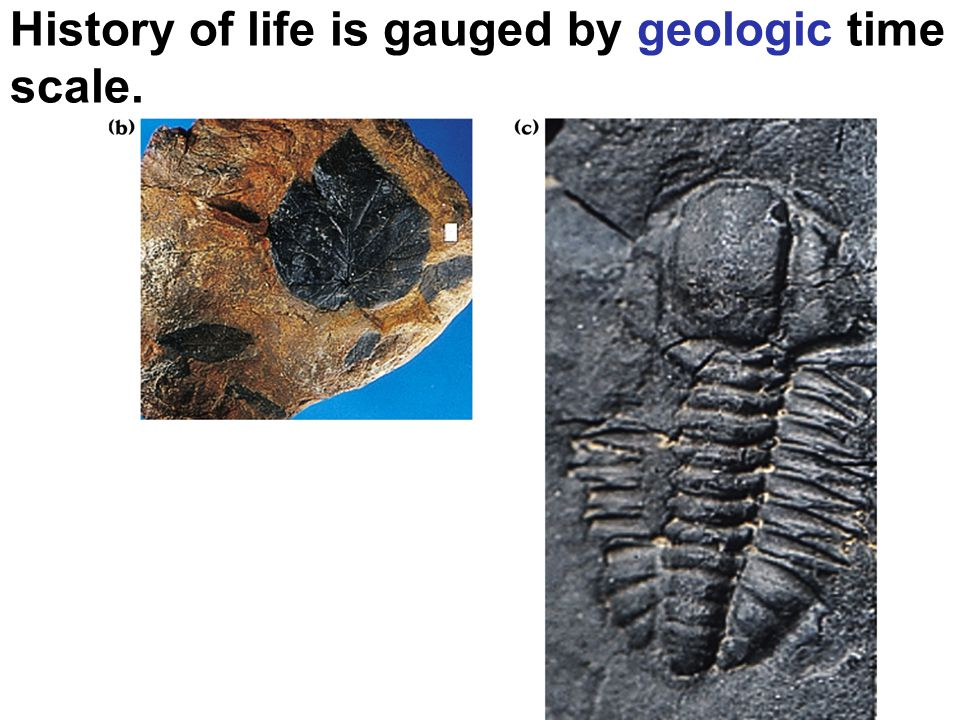 History of life is gauged by geologic time scale.