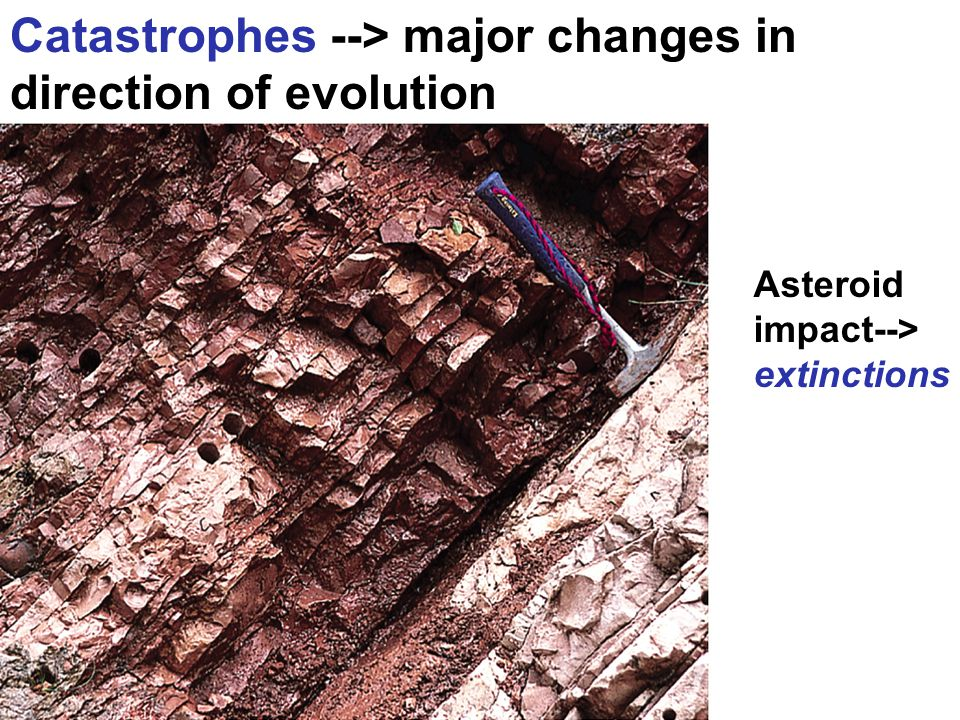 Catastrophes --> major changes in direction of evolution Asteroid impact--> extinctions