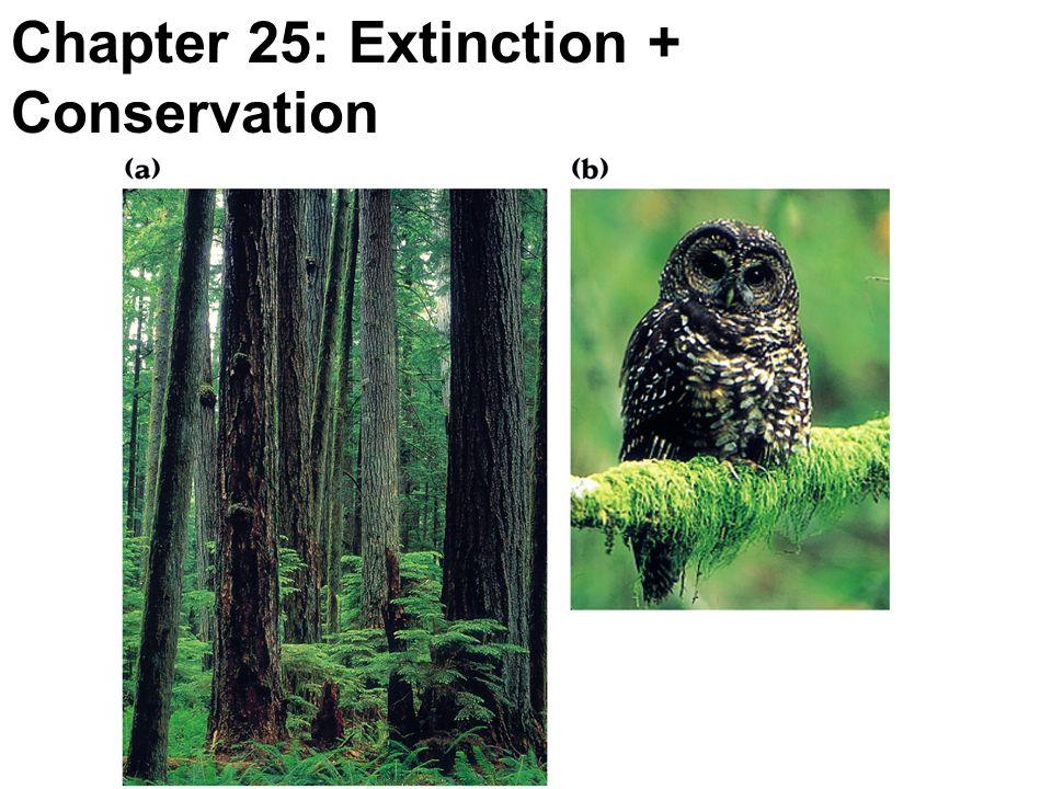 Chapter 25: Extinction + Conservation