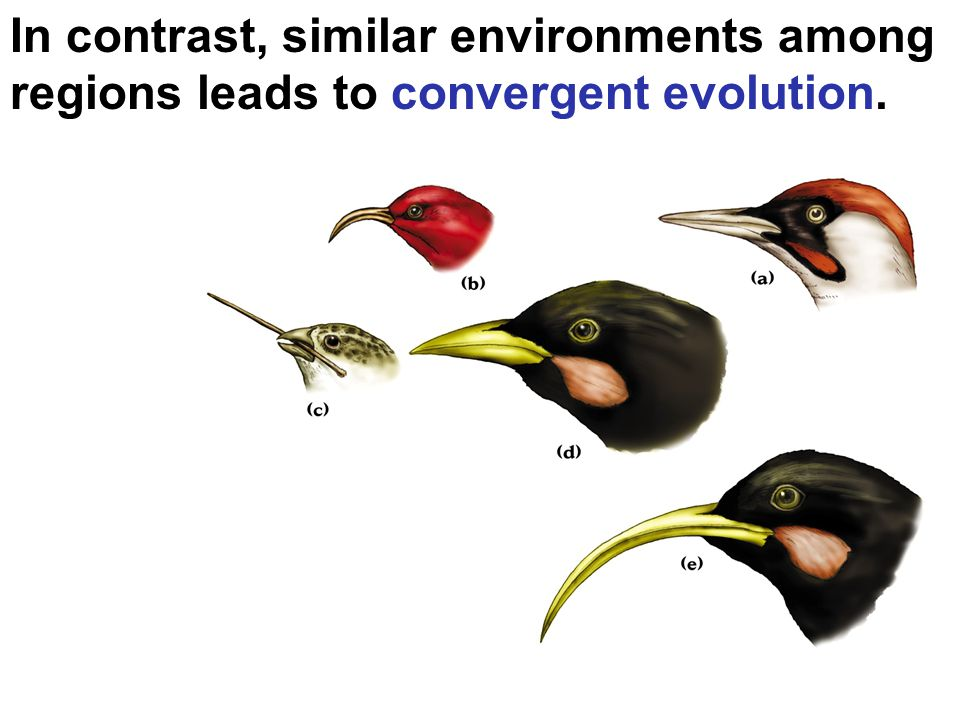 In contrast, similar environments among regions leads to convergent evolution.