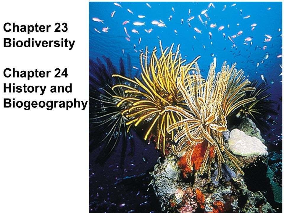 Objectives Species diversity: different geographical scales Factors at local vs.