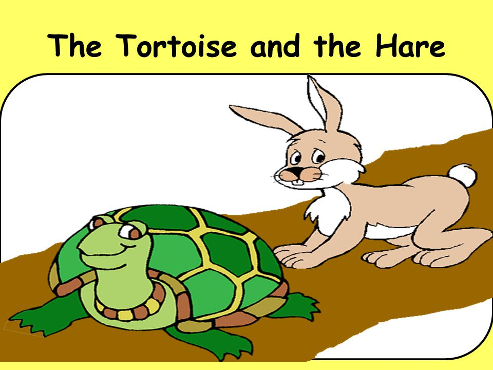 Timothy Tortoise was an easy going animal.He liked to roam happily through the forest.