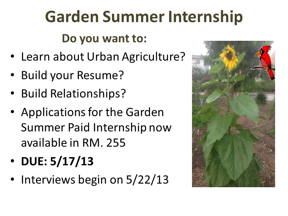 Garden Summer Internship Do you want to: Learn about Urban Agriculture.