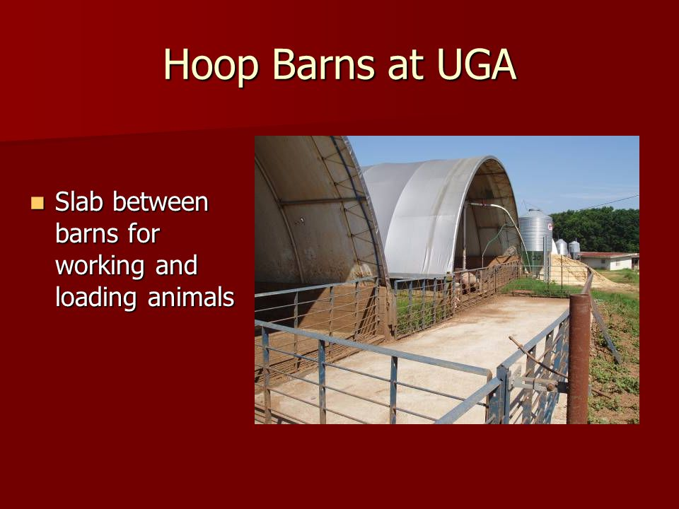 Hoop Barns at UGA Slab between barns for working and loading animals Slab between barns for working and loading animals
