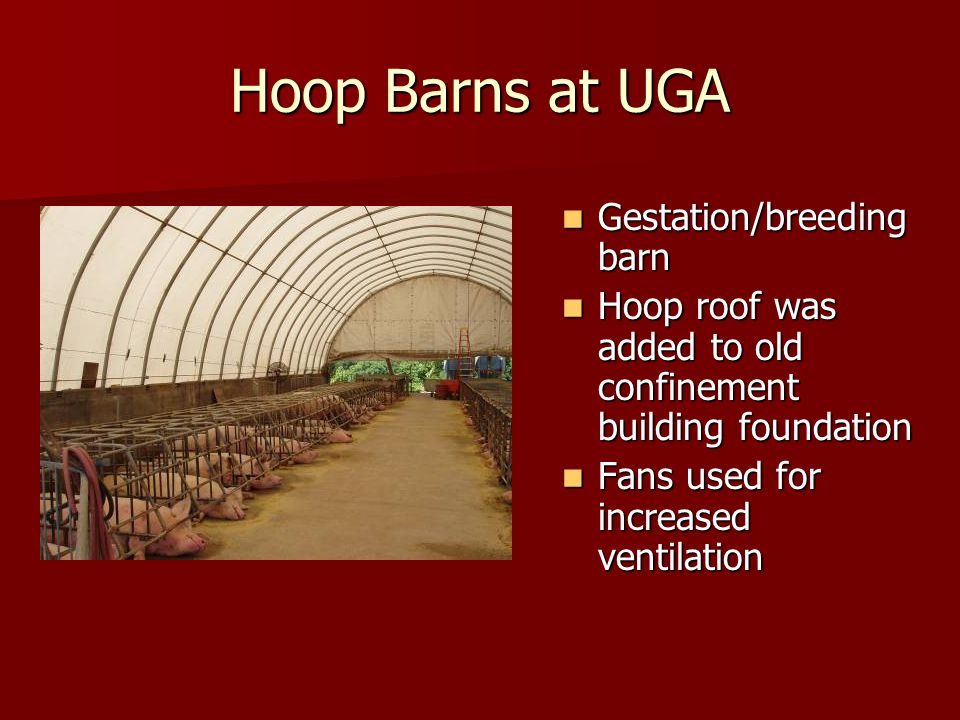 Hoop Barns at UGA Gestation/breeding barn Gestation/breeding barn Hoop roof was added to old confinement building foundation Hoop roof was added to old confinement building foundation Fans used for increased ventilation Fans used for increased ventilation