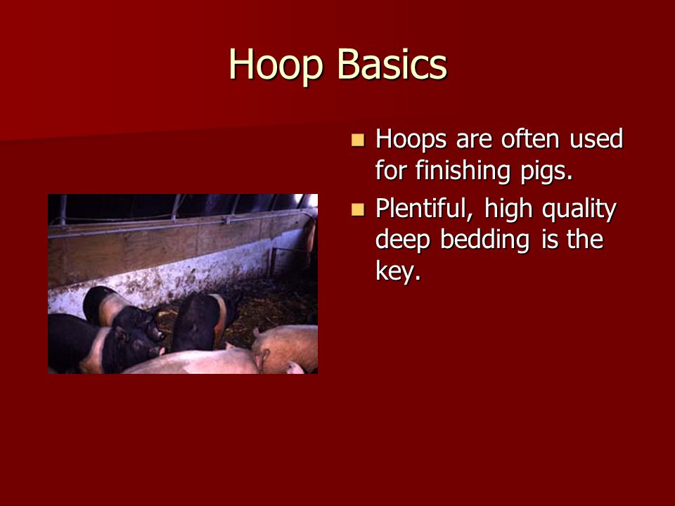 Hoop Basics Hoops are often used for finishing pigs.
