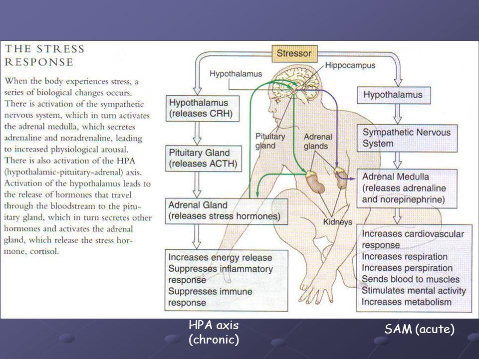 HPA axis (chronic) SAM (acute)