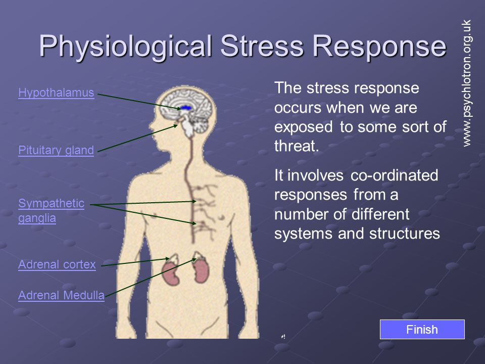 Physiological Stress Response Hypothalamus Pituitary gland Adrenal cortex Adrenal Medulla The stress response occurs when we are exposed to some sort of threat.