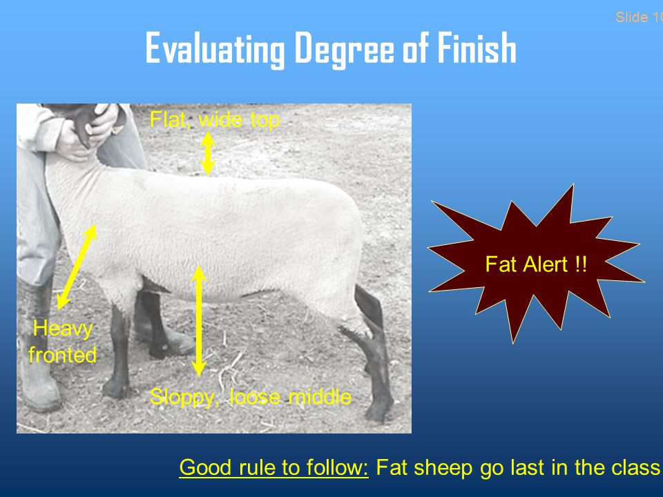 Evaluating Degree of Finish Fat Alert !.