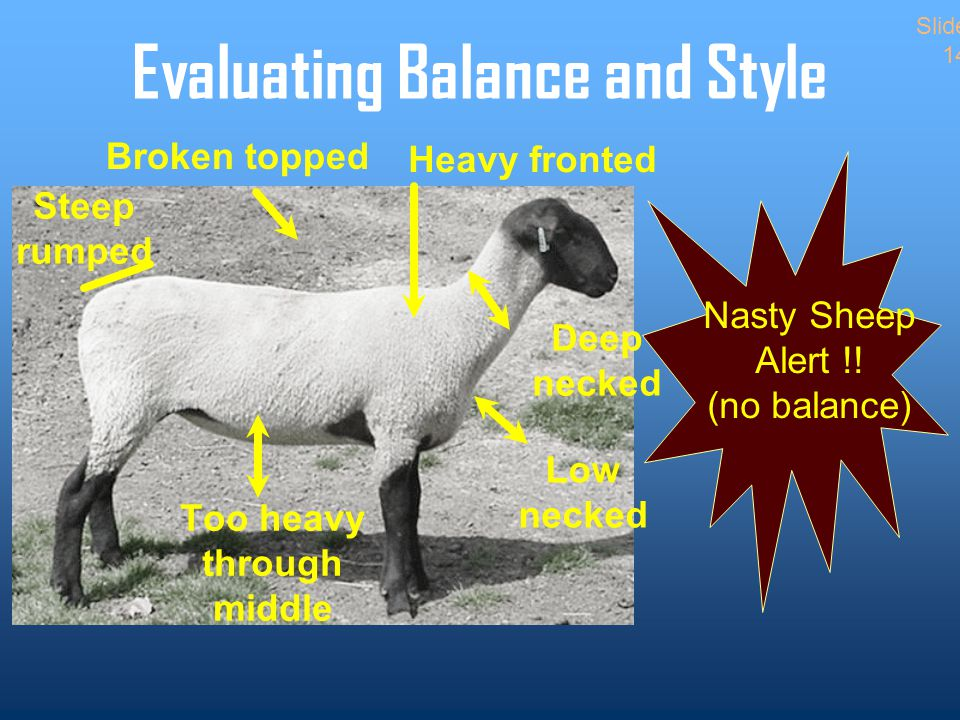 Evaluating Balance and Style Nasty Sheep Alert !.