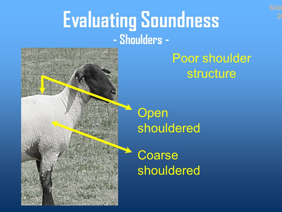 Evaluating Soundness - Shoulders - Poor shoulder structure Open shouldered Coarse shouldered Slide 28